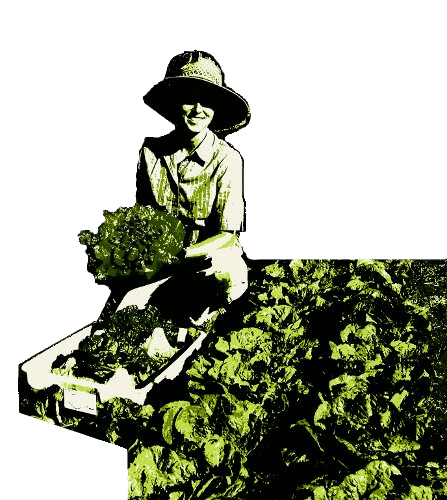 Woman in the orchard with lettuce