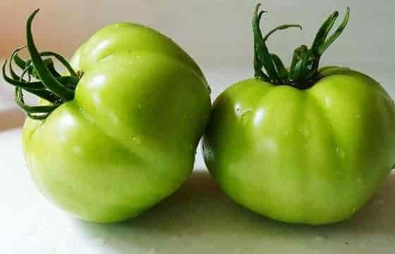 Tomato Fruit Composition - Green Tomatoes for Frying
