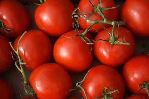 Quality Characteristics of Tomato Fruit - Tomatoes of a Nice Red Color