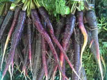 Cultivated Carrot - Carrots of Eastern/Asiatic group