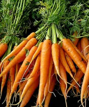 Cultivated Carrot - Western carrot
