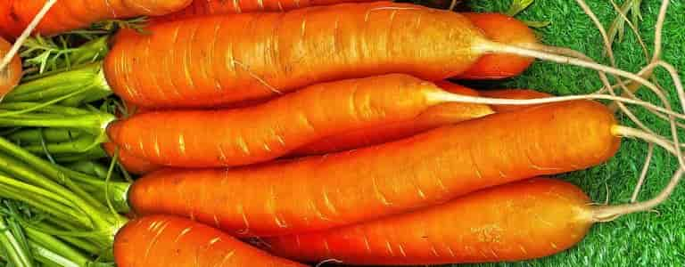 Cultivated Carrot - Carrots