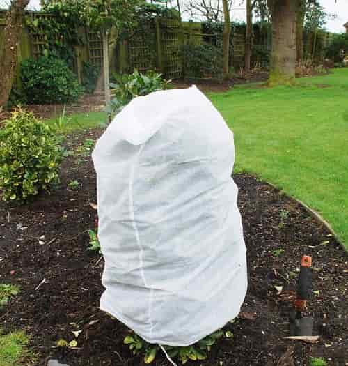 Winter Protection for Azaleas - Azaleas Winter Cover with Protected Fabric