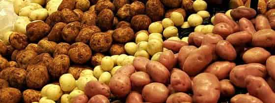 Dietary Fiber In Potatoes - Various Potato Varieties