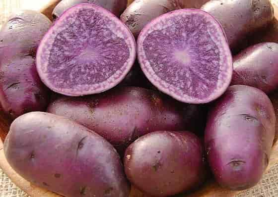 Potato carbohydrates - Red Potato Skin and Flesh 'All Blue' Variety
