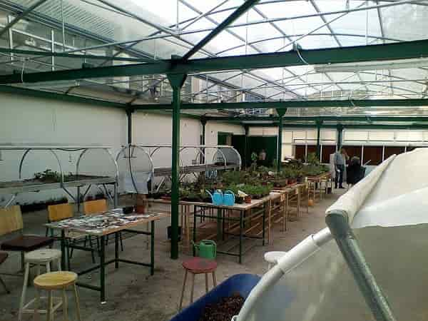 Special Education and Agricultural Training - View from the Interior of the greenhouse