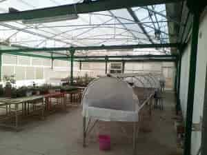 Special Education and Agricultural Training - Interior of Greenhouse
