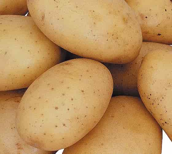 Medium Sized Potato Tubers