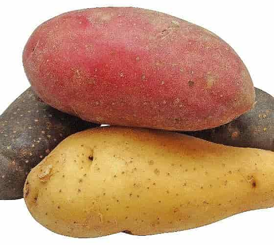 Potato protein - Potato Red, Purple, White
