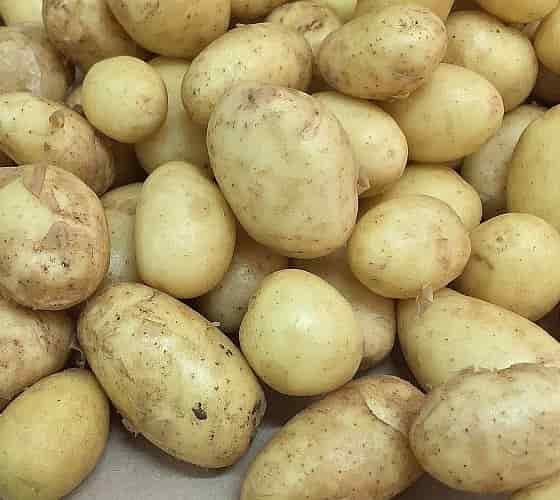 Dietary Fiber In Potatoes - Potatoes on the Bench - Credits Jodiwilli