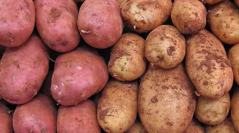 Potatoes of Yellow and Red Peel Color