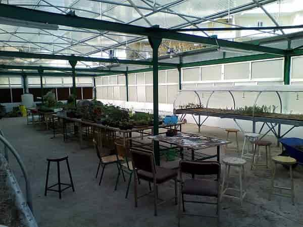 Special Education and Agricultural Training - In The Greenhouse