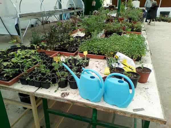Special Education and Agricultural Training - Potted plants before transplanting