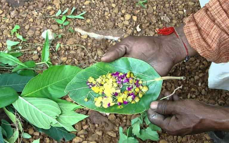 What is Ethnobotany, Plant use demonstration