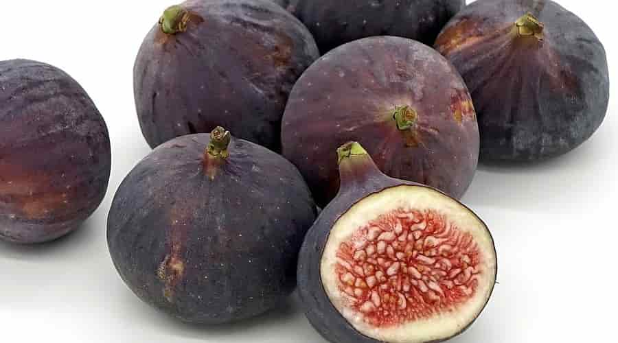 Figs Color Violet Variety