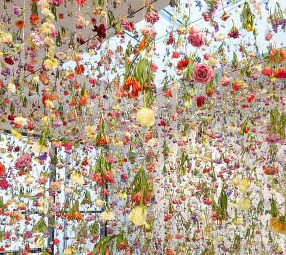 Rebecca Louise Law - The Beauty of Decay, Art Work View