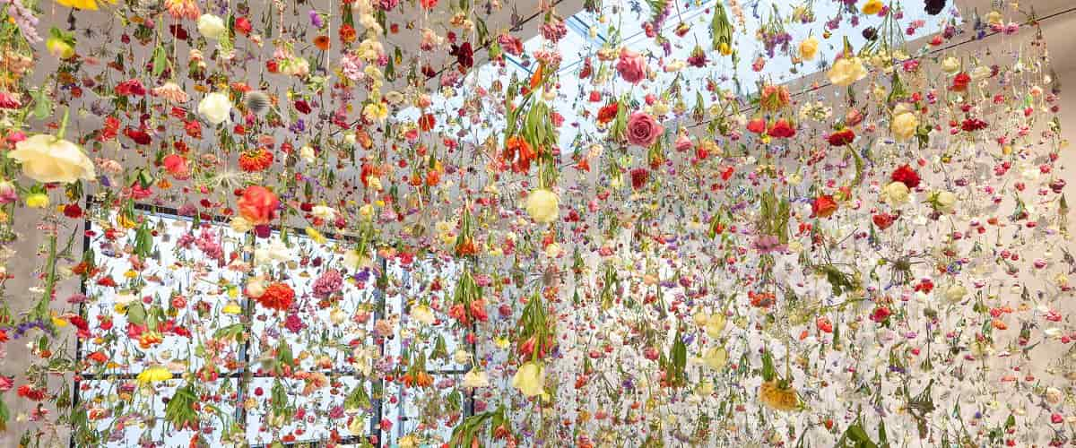 Rebecca Louise Law – The Beauty of Decay, Art Work View