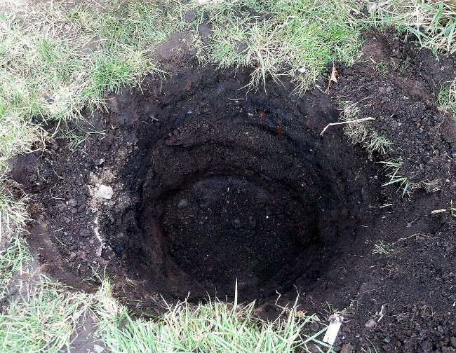 Crapemyrtle Planting Hole in the Lawn