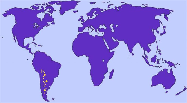 Jacaranda mimosifolia - Map of Origin