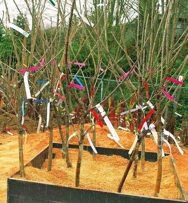 Bare Root Trees Temporary Safe Storage