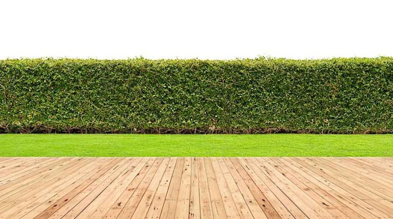 Hedges in the Garden and Landscape - Formal Hedge in the Garden