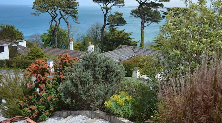 Gardens in An Exposed Coastal Area - Evergreen Shrubs for Coastal Areas