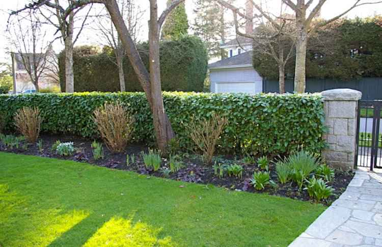 Evergreen Hedge adds Interest to Winter Garden