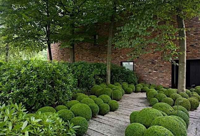 Modern Formal Hedge with Informal Multi Shaped Box Balls Planting Under Trees