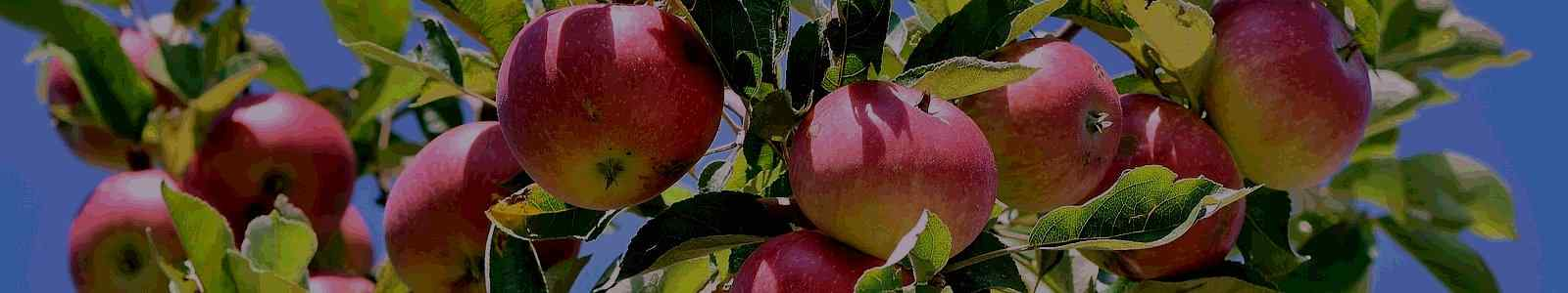 Garden Fruit Trees and Shrubs on the 'Kalliergeia' Website
