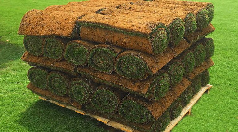What is The Turfgrass Sod - Turfgrass Sod Rolls