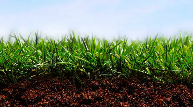 Suitable Soil for Grass Seed - Healthy Lawn On Suitable Healthy Soil