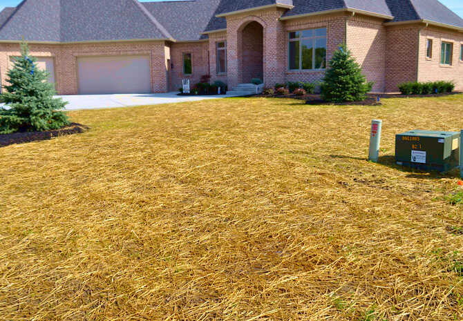 Wheat Straw Coverage of a New Seeding Lawn